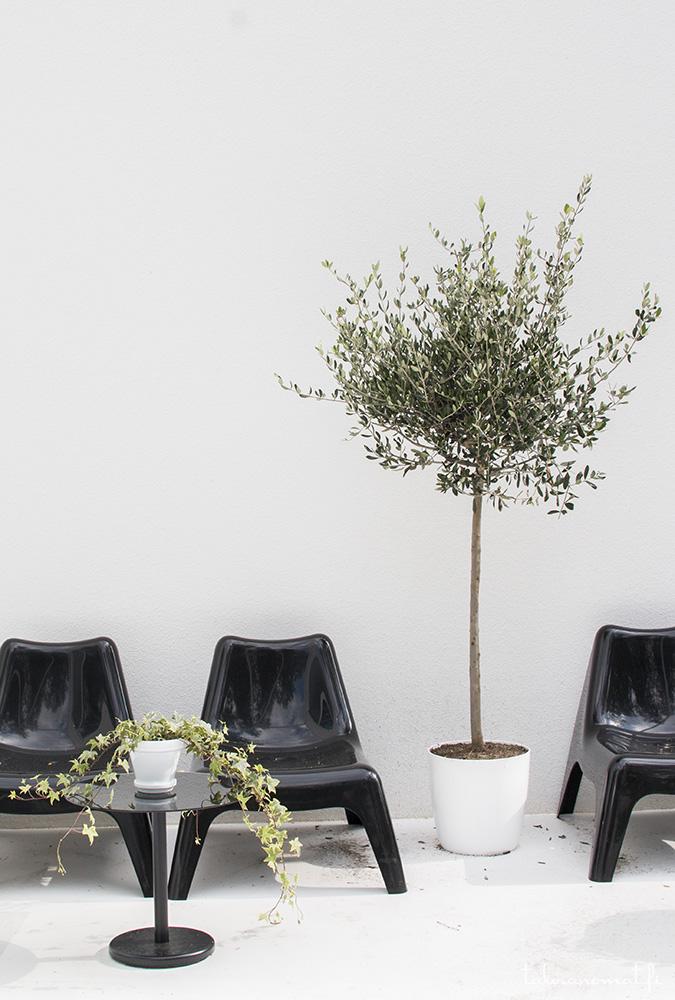 Talo Luck, oliivipuu